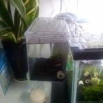 自宅ビーシュリンプ水槽に、サテライト水槽を追加!