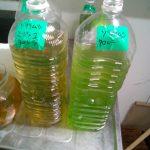 活クロレラ×ミジンコ水に変化あり